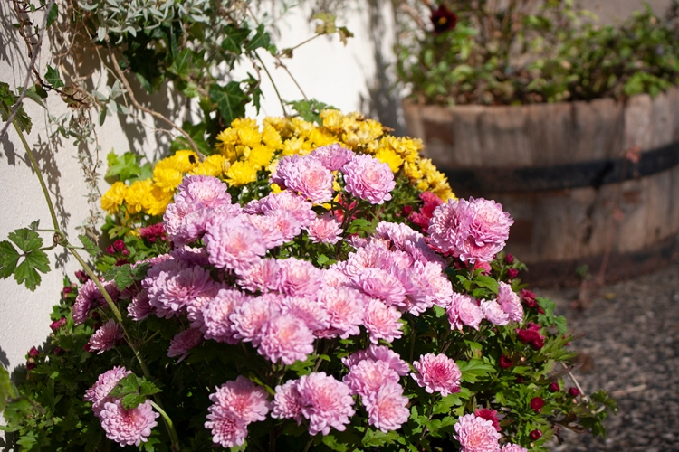 Enjoy nature, flowers and countryside walks while on holiday at Forda Farm, North Devon.
