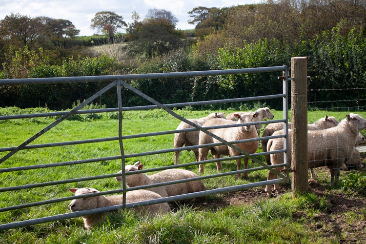Meet the farm animals during your holiday at Forda Farm bed and breakfast.